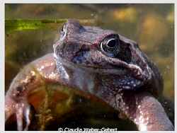 ...can these eyes lie...
